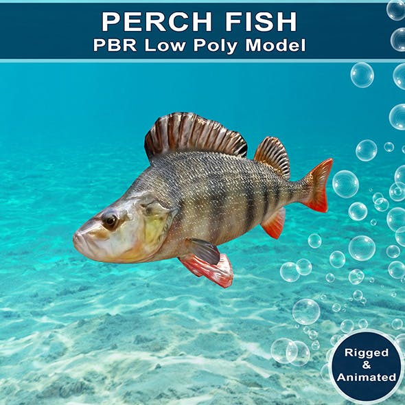 Perch Fish Animated Model
