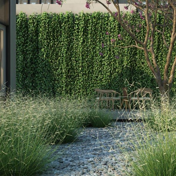 Blonde Ambition Blue Grama Grass