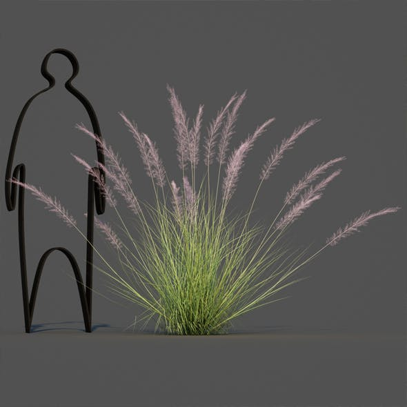 Pink Flamingo Muhly Grass 2 - 3DOcean Item for Sale