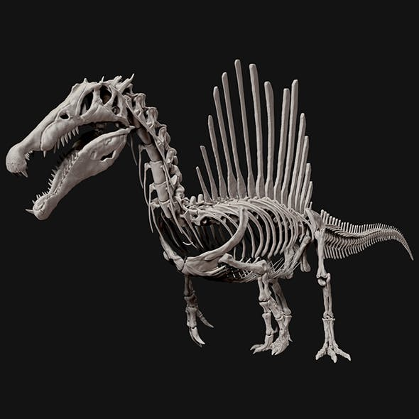 Spinosaurus Full Skeleton Sculpt Model - 3DOcean Item for Sale