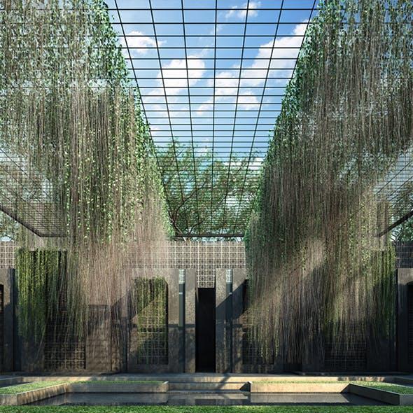Cissus Verticillata - Curtain Ivy