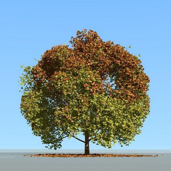 Big tree model summer season with wind animation