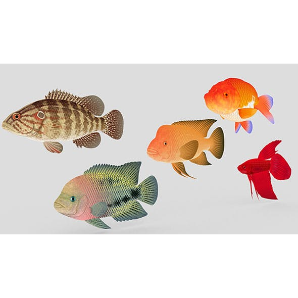 Fish Collection 01