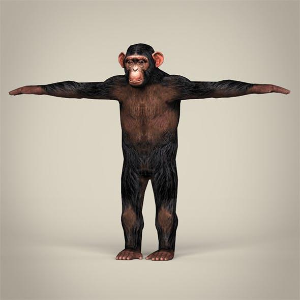 Low Poly Chimpanzee