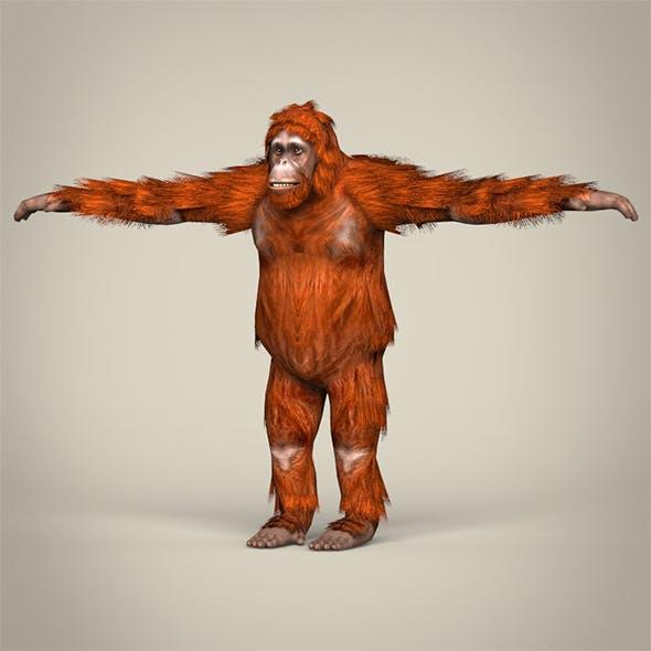 Low Poly Orangutan