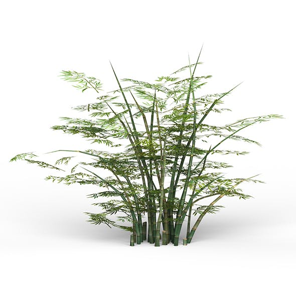 Game Ready Bamboo Tree 02 - 3DOcean Item for Sale