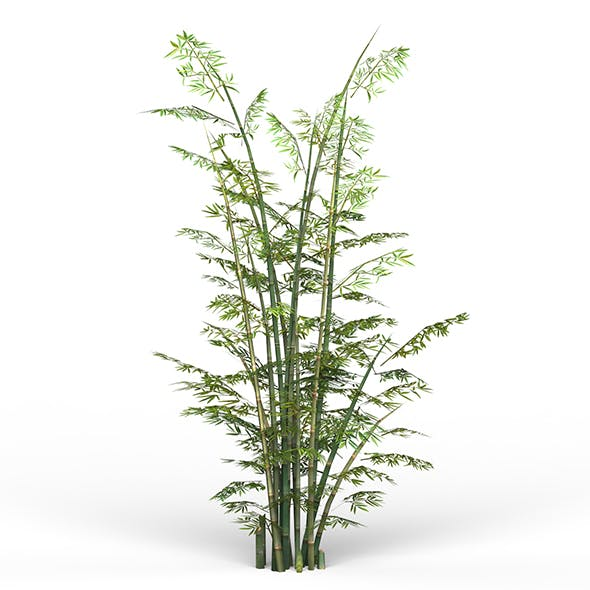 Game Ready Bamboo Tree 03 - 3DOcean Item for Sale