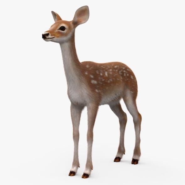 Deer Fawn HD