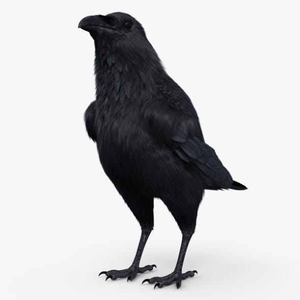 Raven HD