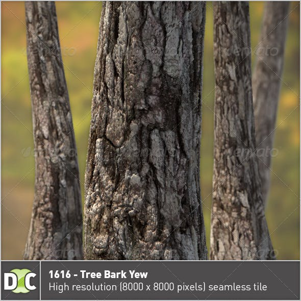 1616 - Tree Bark Yew