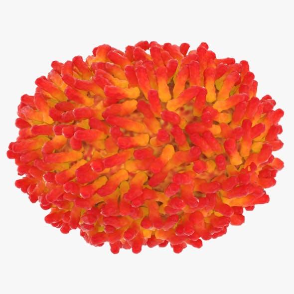 Smallpox Virus - 3DOcean Item for Sale