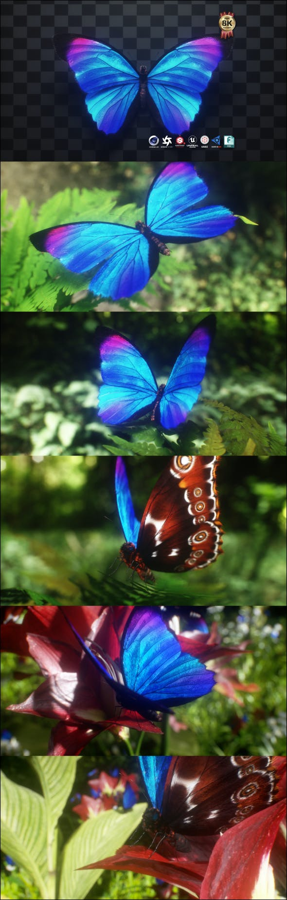 Blue Morpho Butterfly - 3DOcean Item for Sale