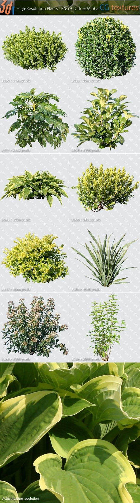 Plants Textures Hi-Res Collection 01 - 3DOcean Item for Sale
