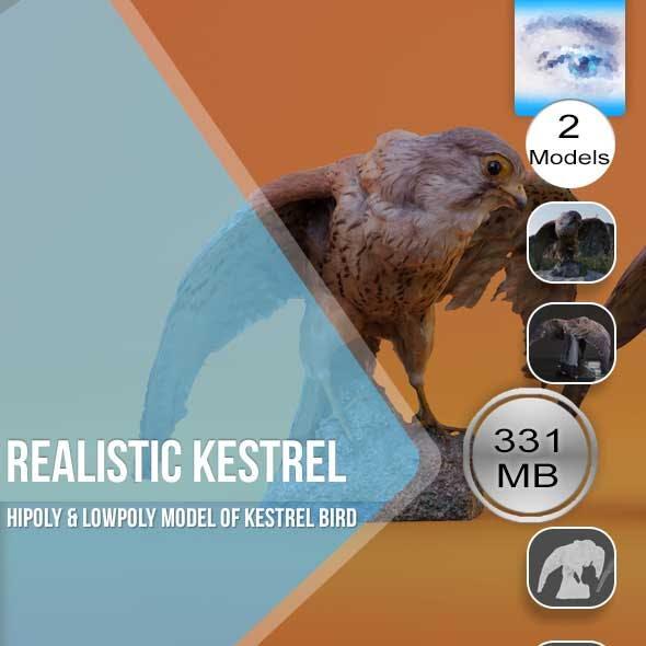 Realistic Kestrel Bird