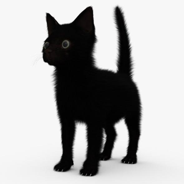 Black Kitten HD - 3DOcean Item for Sale
