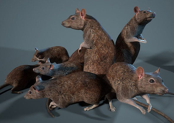 Rat 12-animations Game ready props Low-poly 3D model - 3DOcean Item for Sale