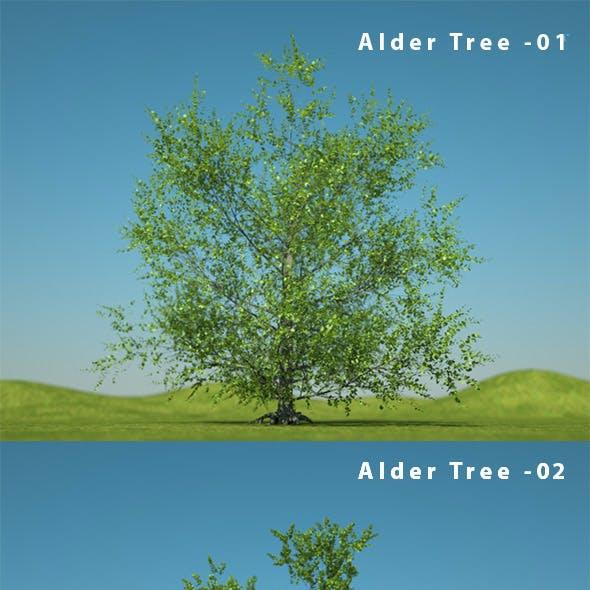 Alder Tree - Alnus