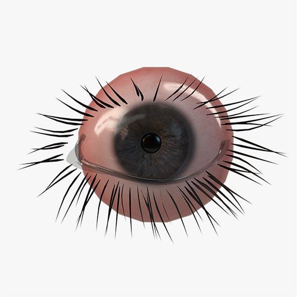 Realistic PBR Eye Set 8 Pieces