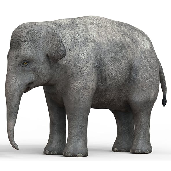 Baby Elephant With PBR Textures