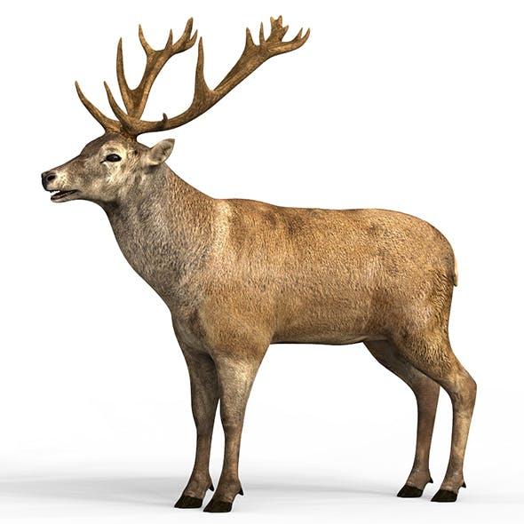 Swamp Deer With PBR Textures