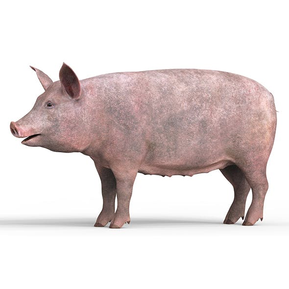 Pig With PBR Textures