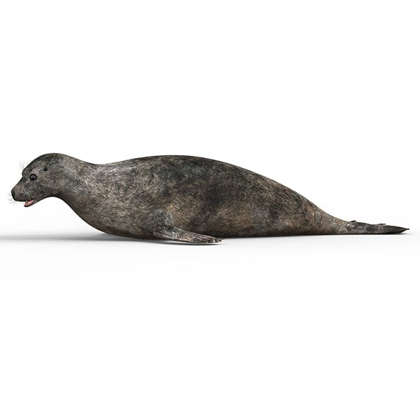 Seal With PBR Textures