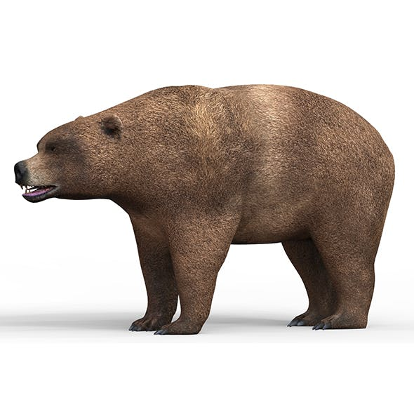 Wild Brown Bear With PBR Textures