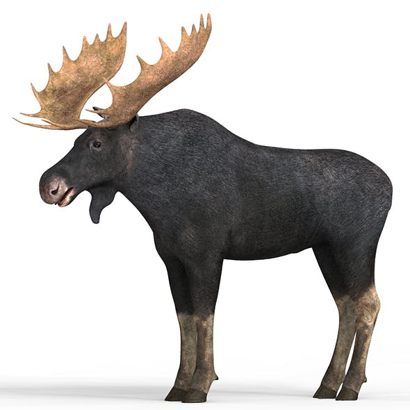 Moose With PBR Textures