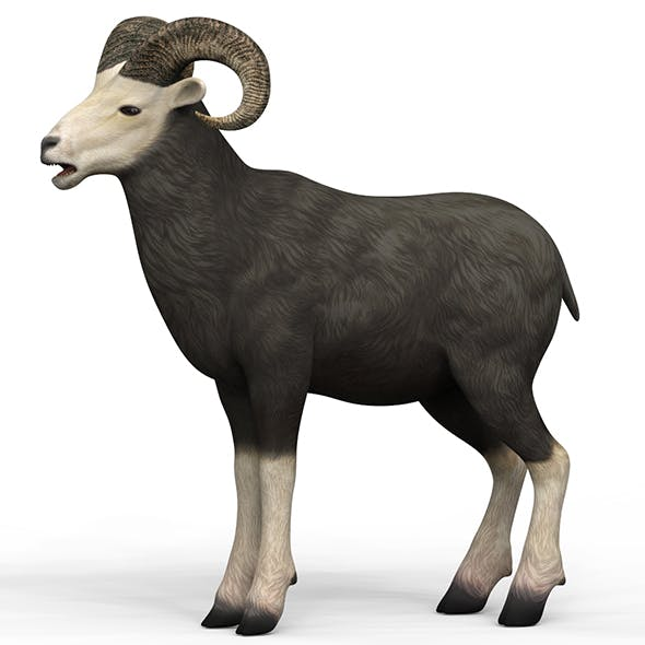 Sheep With PBR Textures