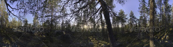 Nature HDRI - Forest Glade - 3DOcean Item for Sale