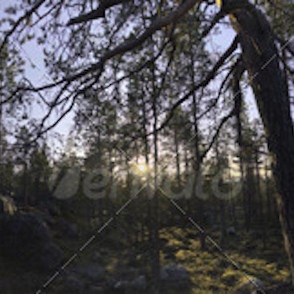Nature HDRI - Forest Glade