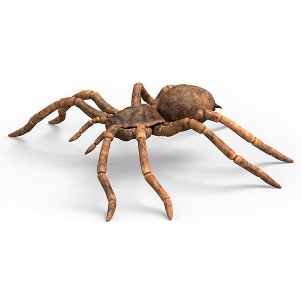 Tarantula Spider With PBR Textures