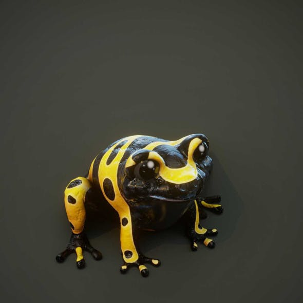 Cartoon Yellow-banded Frog Animated 3D Model