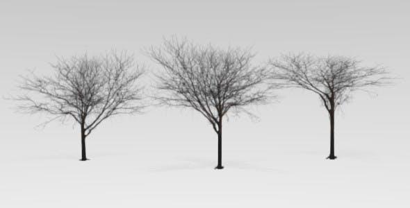 Blender low polly tree  - 3DOcean Item for Sale