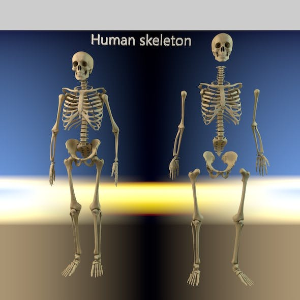 Human skeleton with separated parts