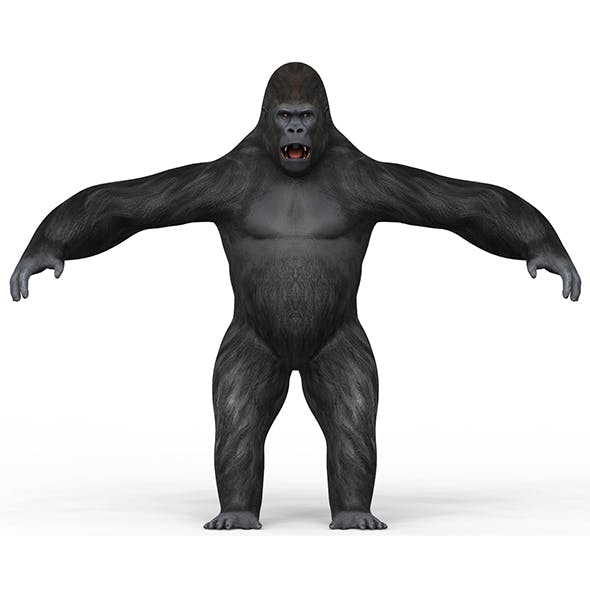 Gorilla With PBR Textures