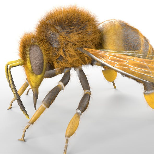 Bee insects 3d model