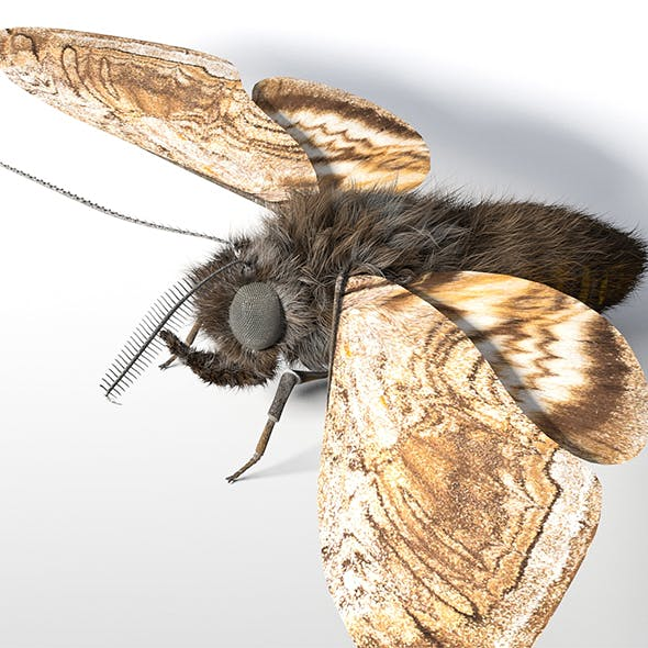 Moth insect 3d model