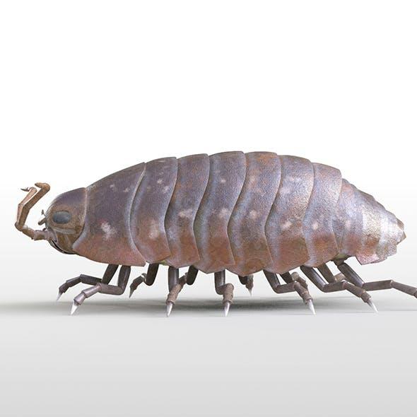 Pillbug insect 3d model