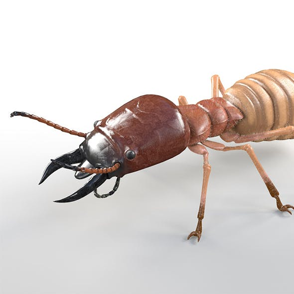termite insects 3d model