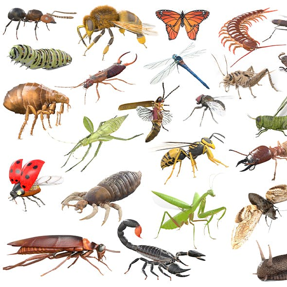 Insect collection 30 set 3d model