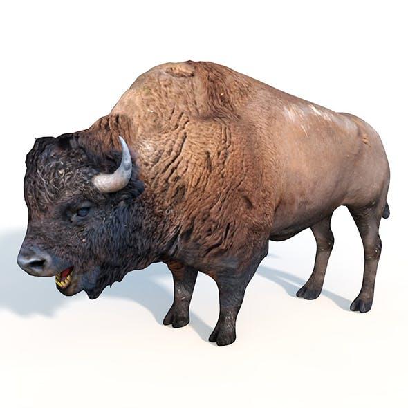 bison rigged 3d model