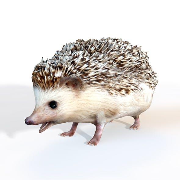 Hedgehog rigged 3d model