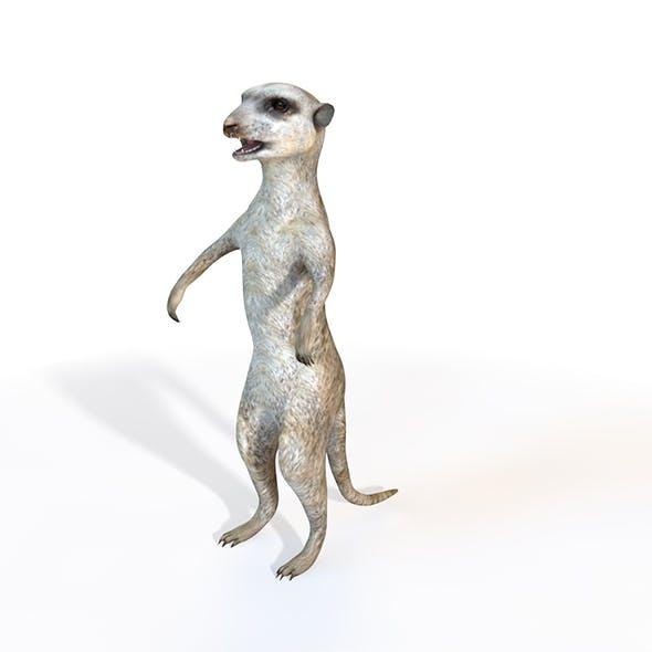 Meerkat rigged 3d model