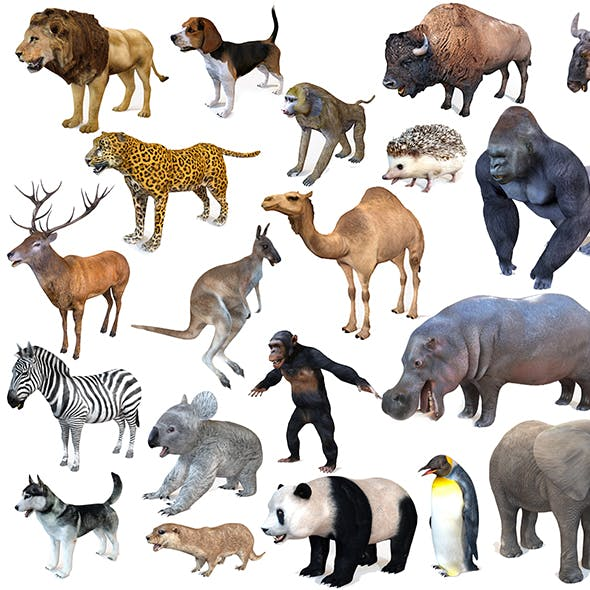 25 Rigged Zoo Animals Collection