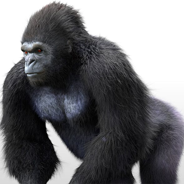 Gorilla hair fur rigged 3d model