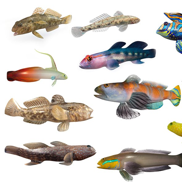goby fish collection 3d model