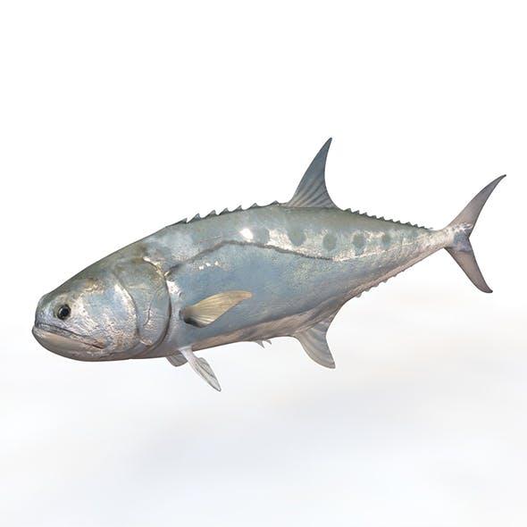 Queenfish 3d model