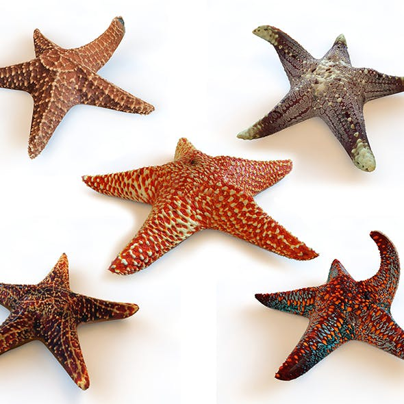 star fish 5 type 3d model