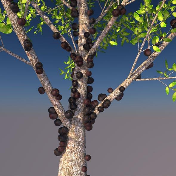 jabuticaba tree 3d model